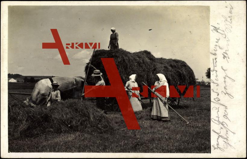 Bäuerinnen und Bauern mit Ochsenkarren, Heuen