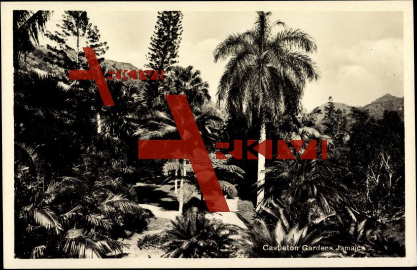 Kingston Jamaika,View of Castleton Gardens