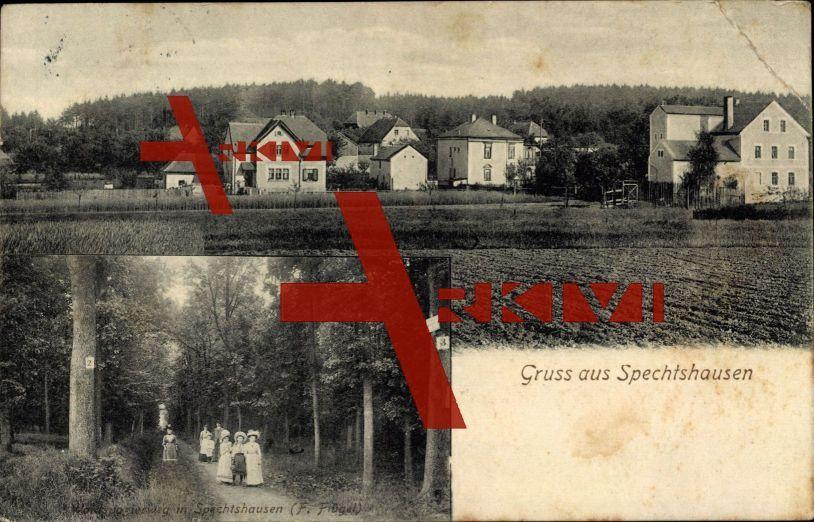 Spechtshausen Tharandt, Waldspazierweg, F. Flügel