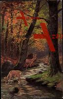 Waldidylle, Rehe trinken am Bach, Wald, Herbst, Laubfall
