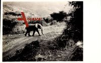 Junger Elefant überquert einen Feldweg, Nairobi Kenia