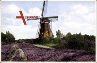 Alte Windmühle auf der Lüneburger Heide, Frühling, Blüten
