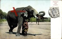 Elephant and Trainer, Indien, Indischer Elefant hebt Kind
