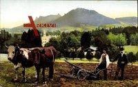 Karpniki Fischbach Riesengebirge Schlesien, Landwirte, Frühling, Ochsenpflug