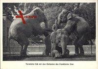Frankfurt Main, Zoologischer Garten, Tierwärter Eck, Elefanten