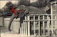 Barcelona Katalonien, Elefante de la Coleccion zoologica, Elefant