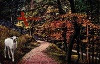 Dresden Weißer Hirsch, Waldweg im Herbst mit weißem Hirsch