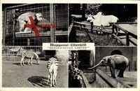 Wuppertal Elberfeld, Zoologischer Garten, Affe, Wasserbüffel, Zebra, Elefant