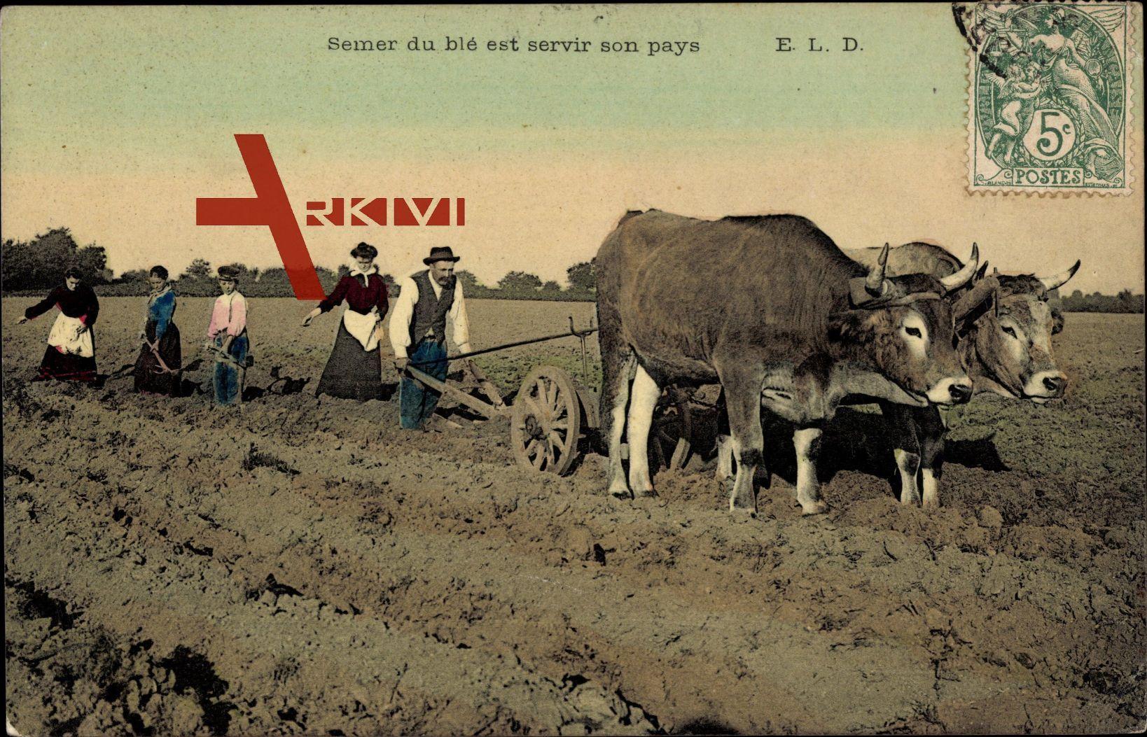 Semer du blé est servir son pays, Ackerpflug, Bauern, Arbeitsochsen