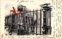 Le Jardin des Plantes, Tierpark, L'Eléphant, Elefant, Gehege