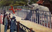 Barcelona Katalonien, Parque Elefant, un zèbre
