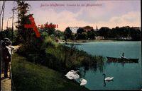 Berlin Weißensee, Schwäne bei der Morgentoilette, Park, Umgebung