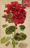 Rote Blumen, Grüne Blätter, Stillleben, Blüten