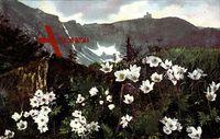 Riesengebirge, Blumenwelt, Pulsatilla alpina und Anemone narcissiflora
