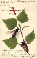 Glückwunsch Pfingsten, Maikäfer krabbeln auf Blättern