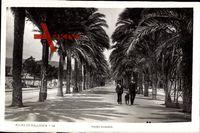 Palma Mallorca Balearische Inseln, Paseo Sagrera, Allee