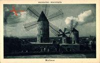 Manacor Mallorca Balearische Inseln, Blick auf drei Windmühlen