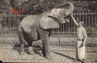 Jardin des Plantes, Toby, Eléphant d'Afrique, Afrikanischer Elefant