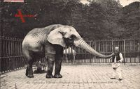 Jardin des Plantes, Eléphant d'Afrique Saib et son Cornac Neff, Elefant
