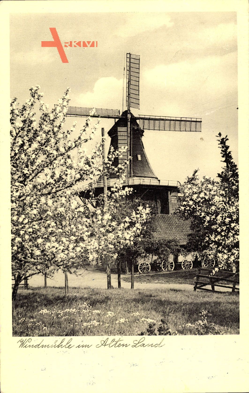 Windmühle im Alten Land, Frühling, Baumblüte
