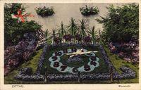 Zittau in der Oberlausitz, Blick auf die Blumenuhr, Blumenbeete, Fensterbank