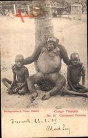 Französisch Kongo, Chimpansé Feminin, Schimpanse, Afrikaner