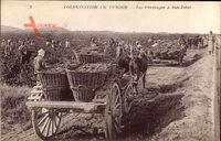 Sidi Tabet Tunesien, Les Vendanges, Landarbeiter bei der Arbeit