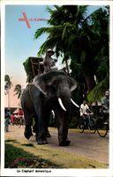 Saigon Cochinchine Vietnam, Un Eléphant domestique, Zahmer Elefant