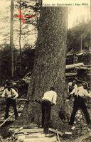 Fällen der Baumriesen im bayrischen Wald, Förster bei der Arbeit