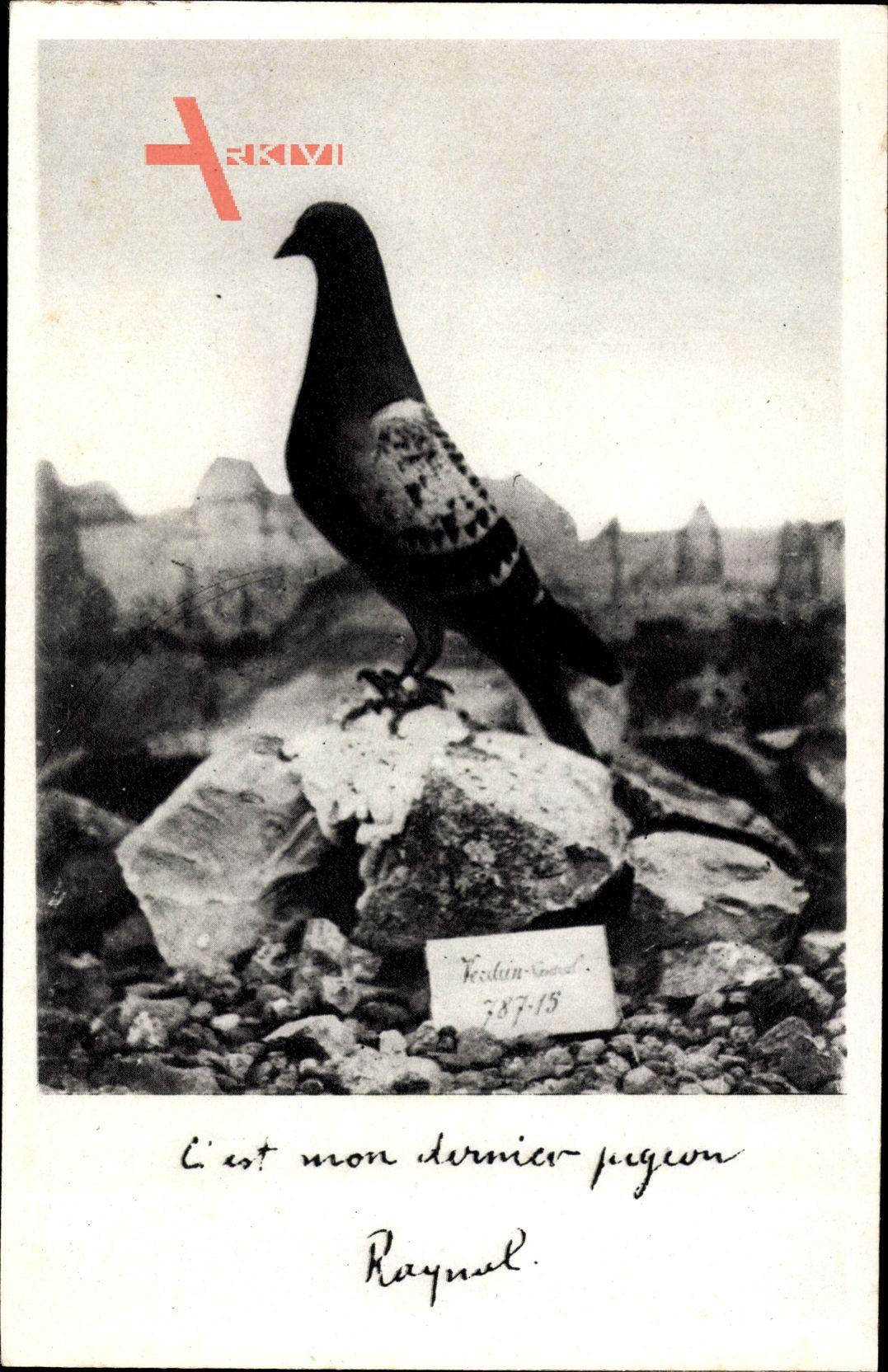 Cest mon dernier pigeon, Verdun, 787 15, 1916, Taube, I. Weltkrieg, Raynal