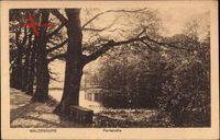 Waldenburg, Partie im Park mit Teich, Parkbank, Herbst