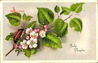 Glückwunsch Pfingsten, Maikäfer auf einem Birkenast, Frühlingsblüte