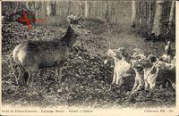 Villers Cotterets Aisne, Equipage Menier, Hallali à Cabaret, Forêt