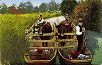 Spreewaldbilder, Viehtransport, Spreewälder transportieren Kühe auf Gondeln