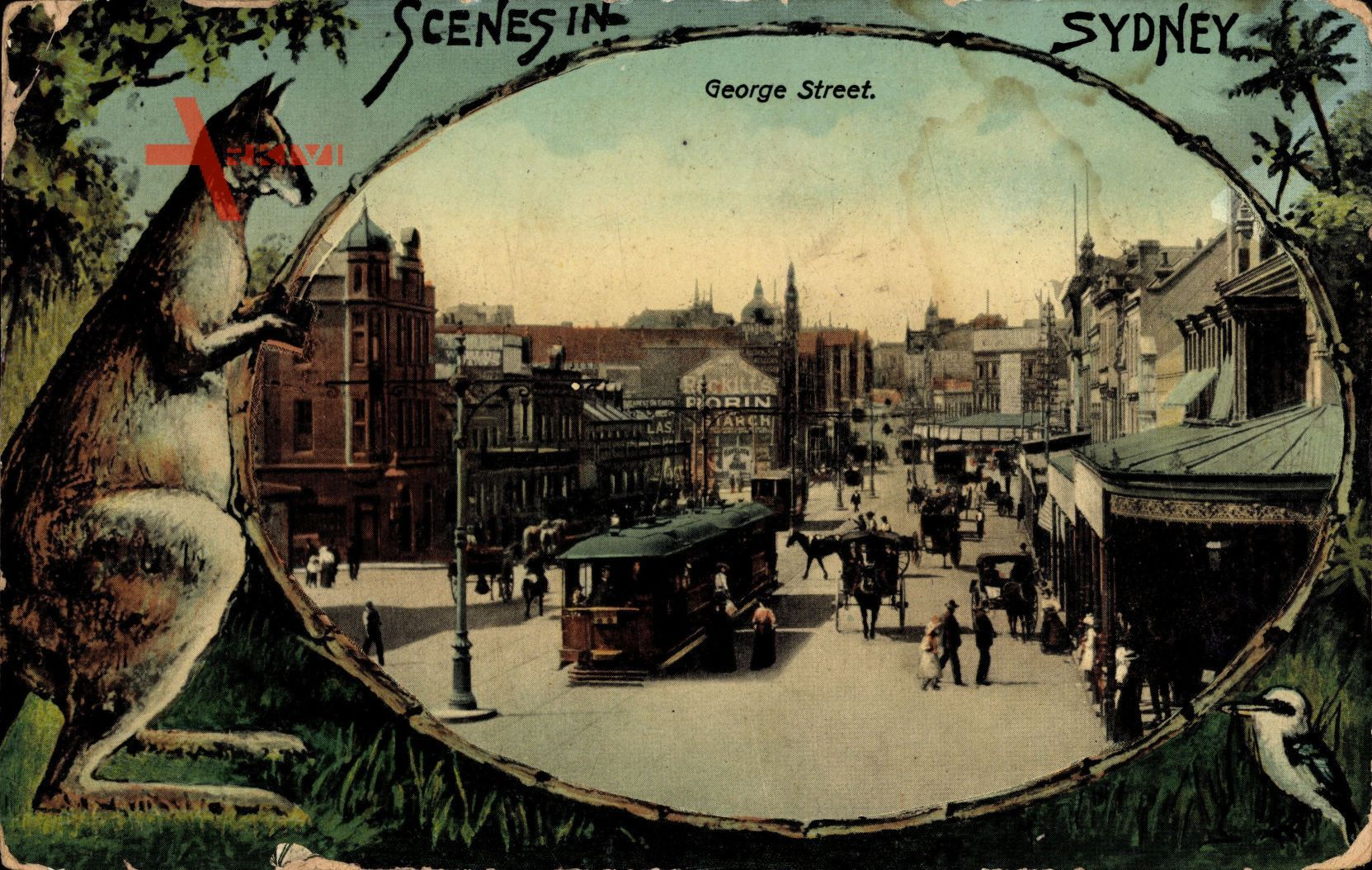 Passepartout Sydney Australien, Känguru, Straßenbahn, George Street