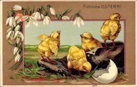 Glückwunsch Ostern, Küken schlüpfen aus Eierschale, Schuh