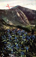 Brunnberg Schlesien, Riesengebirge, Gentiana asclepiada, Schwalbenwurz Enzian
