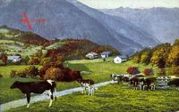 Kühe auf der Alm, Gebirge, Herbst, Gemix Kakao