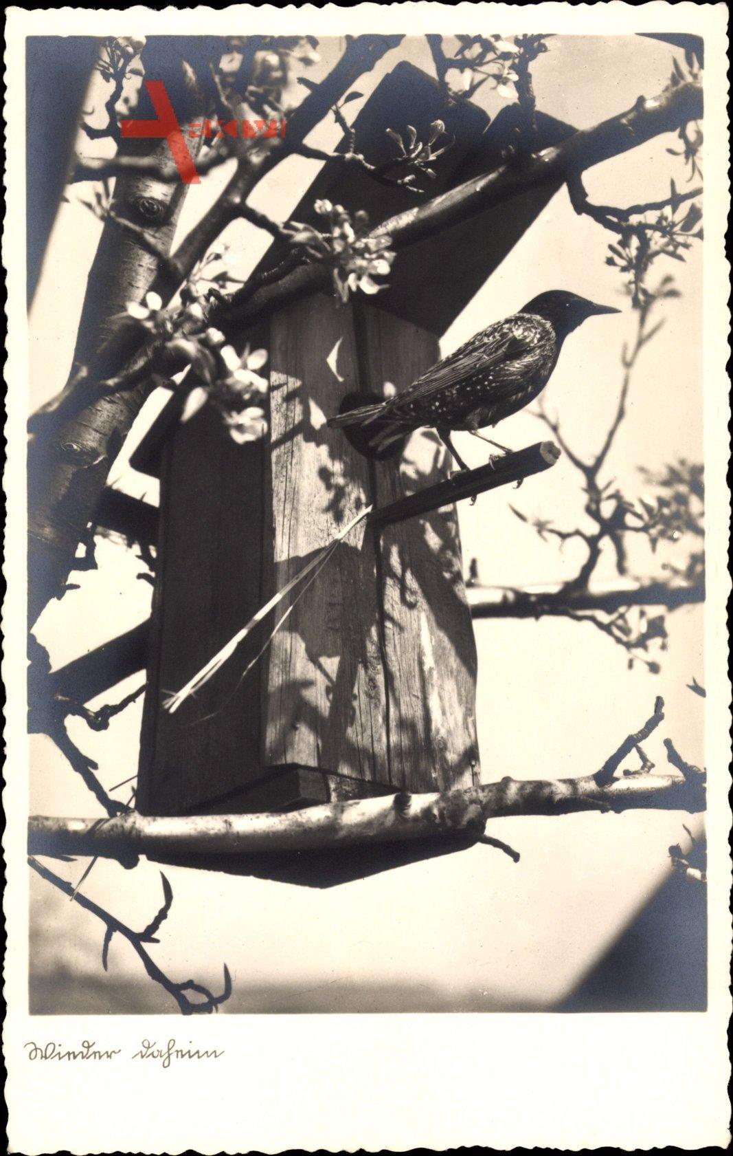 Wieder daheim, Vogel sitzt am Vogelhaus, Frühling, Baumblüte