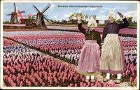 Niederlande, Bloeiende Bloembollenvelden, Hyacinthen, Blumenfeld, Windmühlen