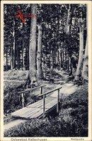 Kellenhusen an der Ostsee in Ostholstein, Waldpartie, Steg