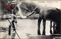 Colombo Ceylon Sri Lanka, Elephant au bain, Elefant beim Baden