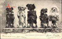 Les Toutous, a droite alignement, Männchen machende Schoßhunde