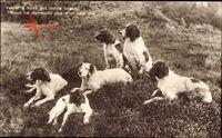 Im Gras liegende Hunde, Veiller a tout est notre orgueil, EAS br. 3700 4