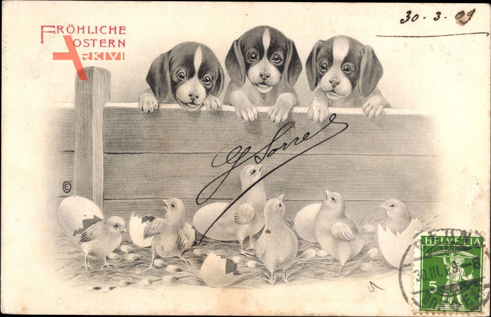 Glückwunsch Ostern, Geschlüpfte Küken, Hundewelpen