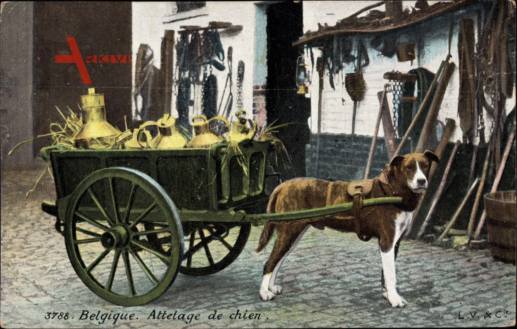 Belgique, Attelage de Chien, Zughund, Milchtransport