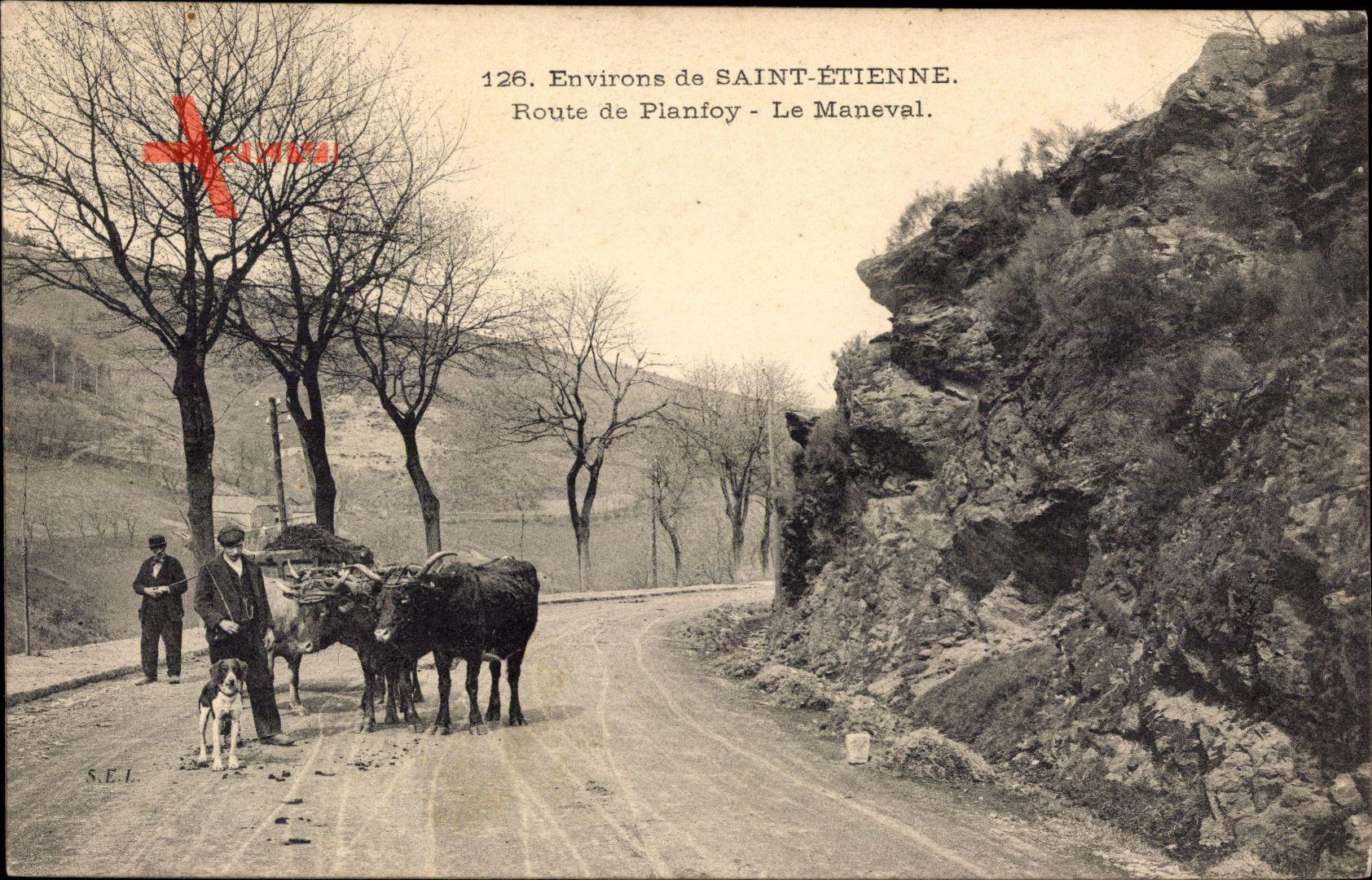 Saint Étienne environs Loire, Route de Planfoy, le Maneval, Rinder, Hund