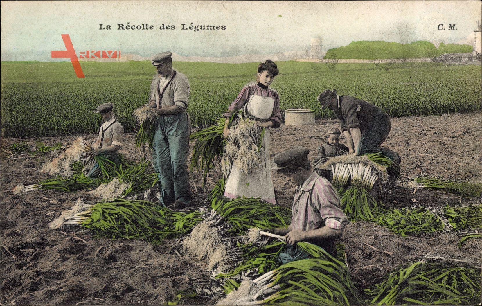 La Récolte des Légumes, Gemüseernte, Landwirte, Frankreich