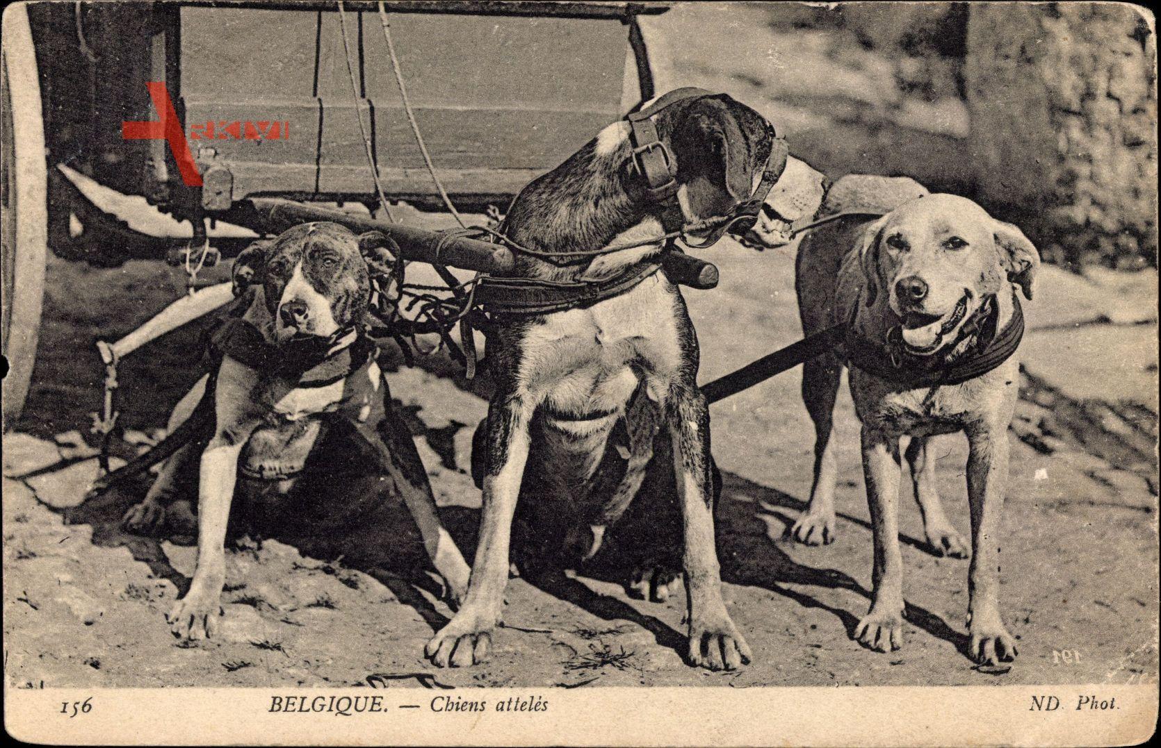 Belgien, Chiens attelés, Zughunde am Holzkarren