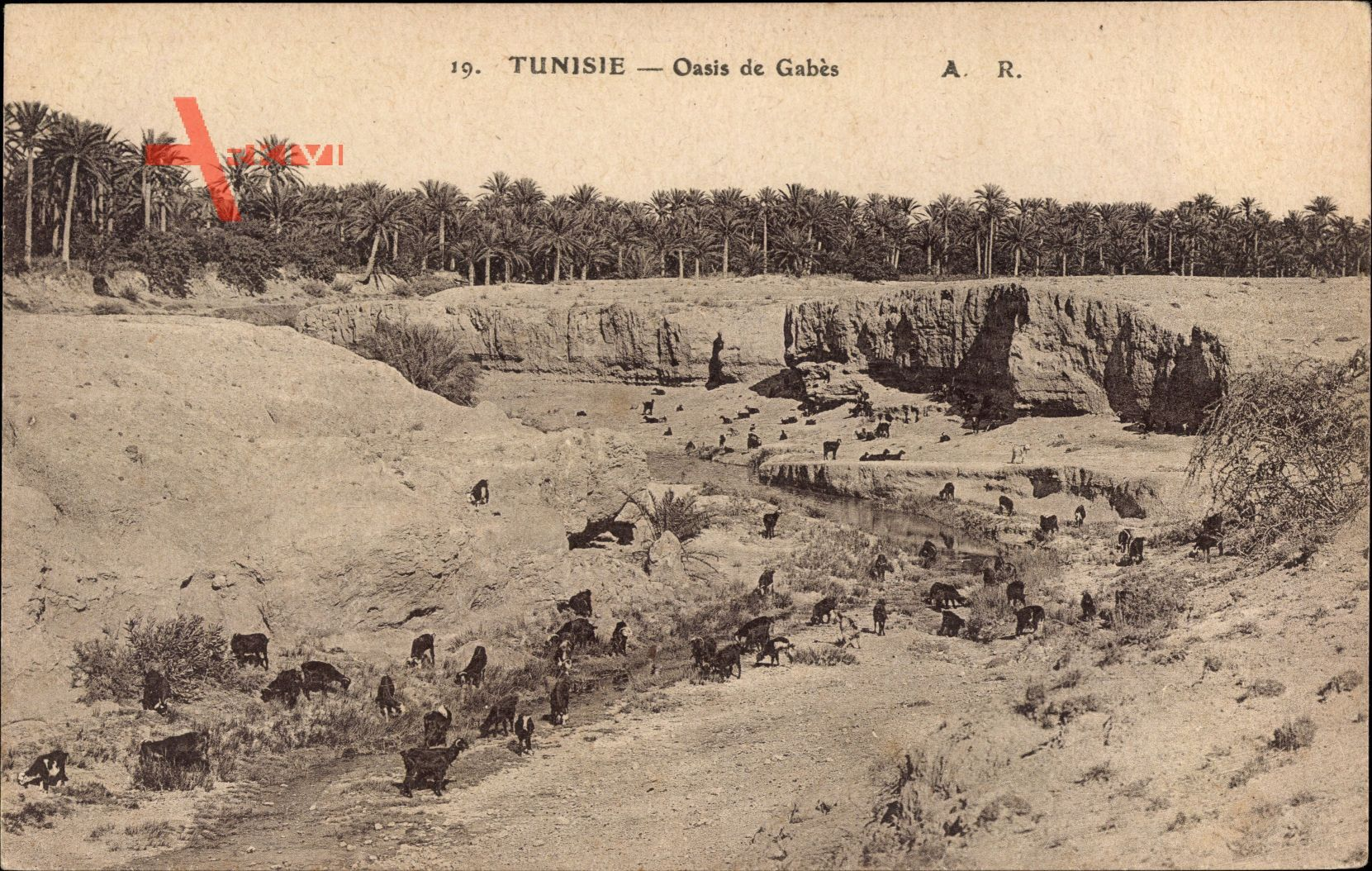Gabès Tunesien, Oasis, Ziegen an einem Flussbett